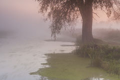 Beautiful morning mist landscape near a river. Royalty Free Stock Images