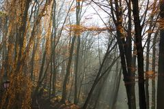 Beautiful morning in the misty autumn park with sun rays. Fall royalty free stock photo