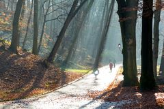 Beautiful morning in the misty autumn park with sun rays. Fall royalty free stock images