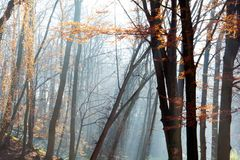 Beautiful morning in the misty autumn park with sun rays. Fall stock photos