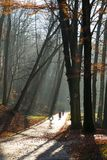 Beautiful morning in the misty autumn park with sun rays. Fall. Toned royalty free stock images