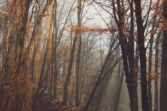 Beautiful morning in the misty autumn park with sun rays. Fall. Toned royalty free stock image
