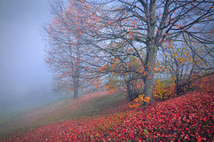 Beautiful morning in the misty autumn Stock Photography