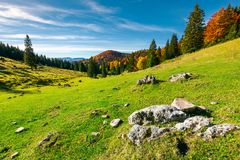 Rocks on a grassy meadow. Beautiful morning in mountains. mixed forest in fall colors on the hill. rocks on a grassy meadow Royalty Free Stock Photography