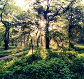 Beautiful morning in the park. stock photography
