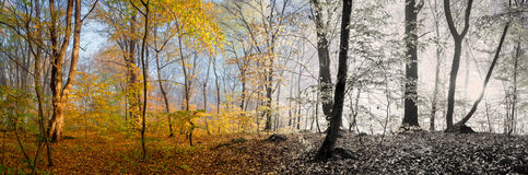 Beautiful morning scene in the forest,  panorama changing season Stock Photo