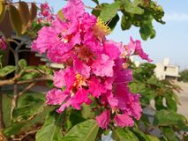 In the morning scene of beautiful pink flowers