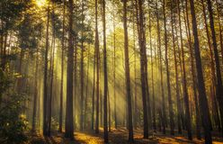 Beautiful morning scene, sun rays break through the branches of trees. Background stock photo