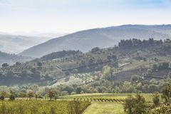Beautiful morning with some fog between the hills with vineyards. Beautiful morning over Castellina in Chianti with some fog between the hills with vineyards in Stock Photography