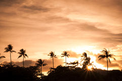 Beautiful morning with sun rises with silhouette palm tree Royalty Free Stock Image