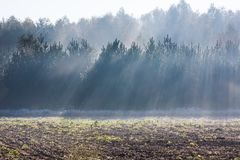 Beautiful morning with sunbeams and young forest. Autumnal landscape. Stock Photography