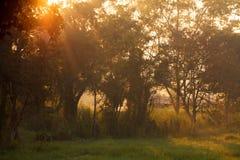 Beautiful morning sunlight through a tree Stock Photo