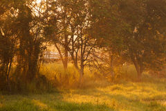 Beautiful morning sunlight through a tree in forest Royalty Free Stock Images