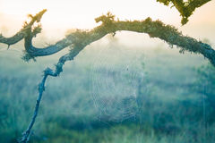 A beautiful morning sunrise landscape with a spider web. Royalty Free Stock Photos