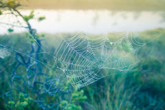 A beautiful morning sunrise landscape with a spider web. Royalty Free Stock Image