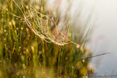 A beautiful morning sunrise landscape with a spider web. Stock Images