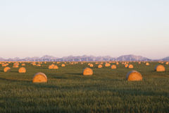 Beautiful morning sunrise shining on hay bales with mountains in the distance. Royalty Free Stock Photo