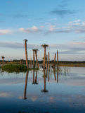 Beautiful morning in Viera Wetlands Stock Images