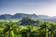 Beautiful morning view of green fields, trees and mogotes in Vinales Valley Cuba royalty free stock photography
