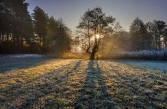 Free Beautiful Morning With Frost On Plants. Autumnal Landscape. Royalty Free Stock Photography - 51876017
