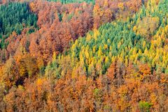 Beautiful mosaic of colorful coniferous autumnal forest stock images
