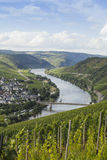 Beautiful Mosel river Stock Images