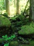 Beautiful moss area Royalty Free Stock Photography
