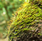 Beautiful moss green on brown wood surface. Stock Photography