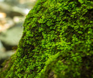 Beautiful moss green on brown wood surface. Royalty Free Stock Images