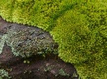 Beautiful Moss Green. On a rock Royalty Free Stock Photo