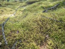 Beautiful moss and lichen covered stone. Bright green moss background. Saturated green abstract pattern. Shallow focus royalty free stock photo
