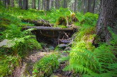Beautiful moss and lichen covered stone Stock Photos