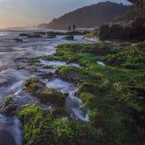 Beautiful Mossy Seascape in Yogyakarta Royalty Free Stock Photos