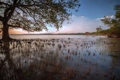 Beautiful Mossy Seascape in Yogyakarta Royalty Free Stock Images