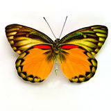 Beautiful Moth Royalty Free Stock Images