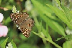 Beautiful moth on flower royalty free stock photo Stock Image