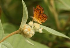 Beautiful moth on furry plant Stock Image