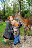 Beautiful mother and son pet a deer Stock Images