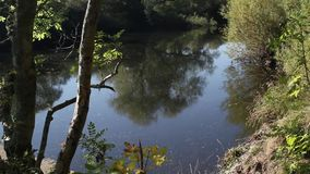 Beautiful Motherwell park with river Clyde in Scotland, footage stock footage