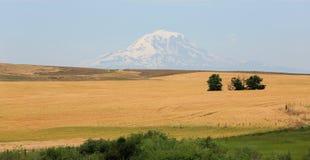 Beautiful Mount Adams Stock Photos