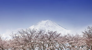 Beautiful Mount Fuji and cherry blossom trees  Royalty Free Stock Image
