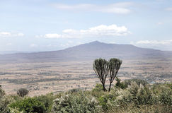 Beautiful Mount Longonot and Acacia tree Stock Photos