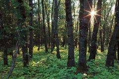 Beautiful Mount Shasta Wilderness Royalty Free Stock Image