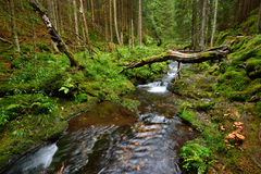 Beautiful mountain creek in a deep forest Royalty Free Stock Photo
