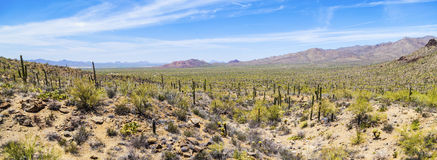 Beautiful mountain desert landscape Stock Photography