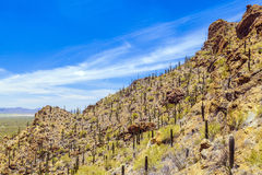 Beautiful mountain desert landscape Royalty Free Stock Photo