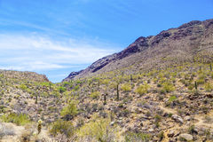 Beautiful mountain desert landscape with cacti Royalty Free Stock Photos