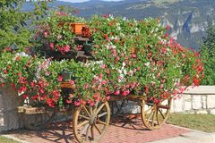 Beautiful mountain flower cart with many Geraniums and other flo Royalty Free Stock Photos
