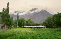 Beautiful mountain with flower field in Ladakh Stock Photography