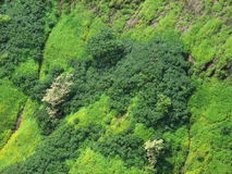 Beautiful Mountain Greenery Royalty Free Stock Photo